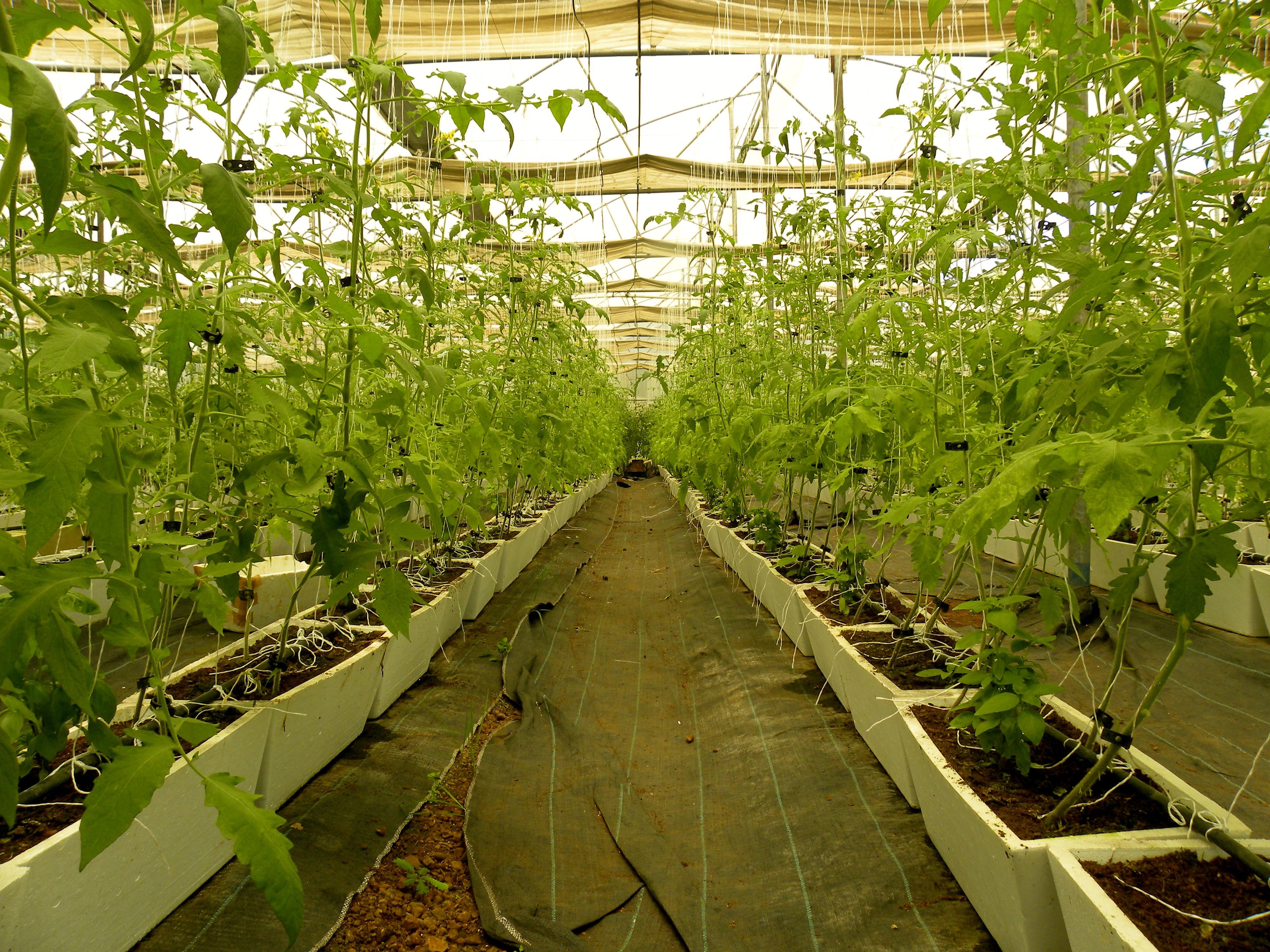 Triton Foodworks - Hydroponics Farming